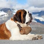 pixwords SAINT-BERNARD